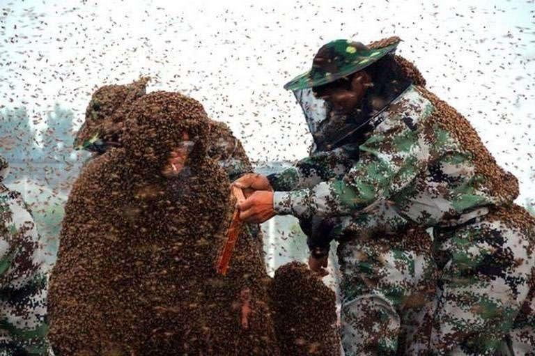 Chinese-beekeeper-Gao-Bingguo