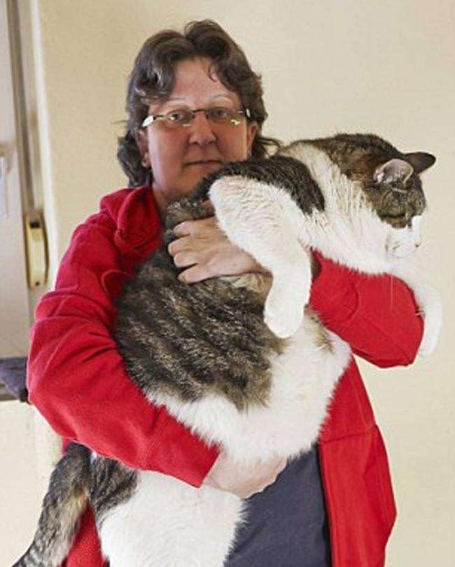 fat_cat-s_650_060515031213