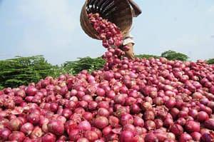 onion-farmer_5745268ef0d5d